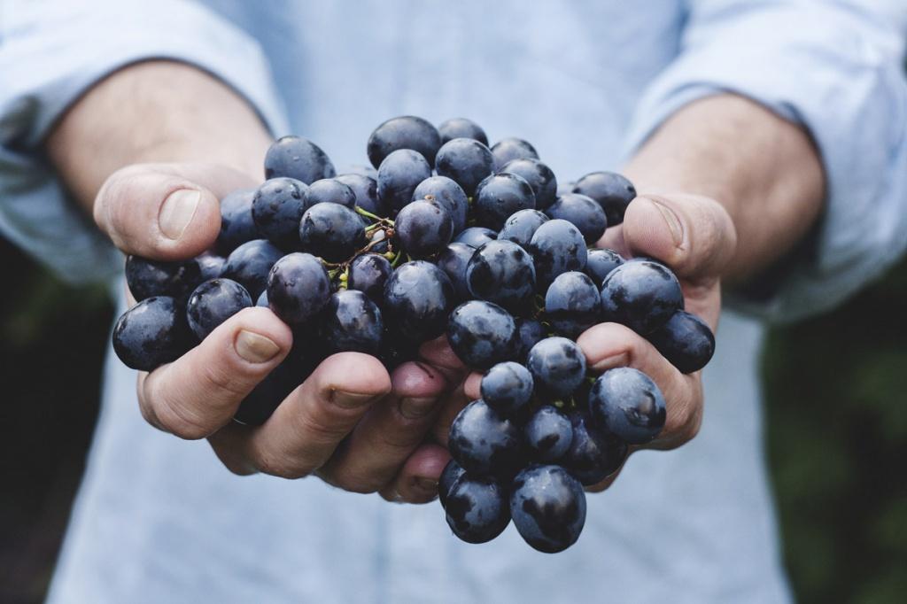 vinograd.jpg