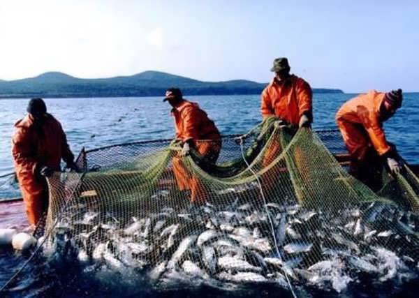 как ловить на японском море